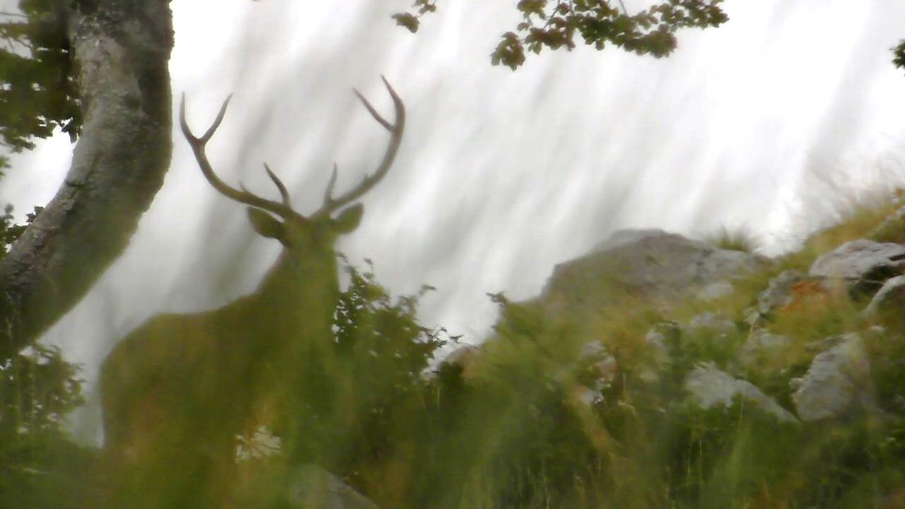 Cervo – Bramiti e combattimenti con Atropa Trekking – 4 e 5 ottobre